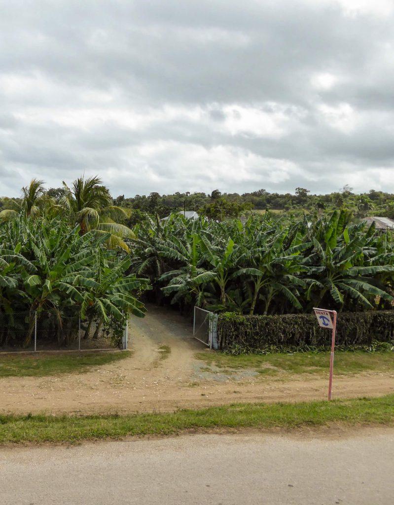 cuba plantages