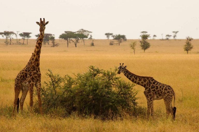 reisroute Tanzania