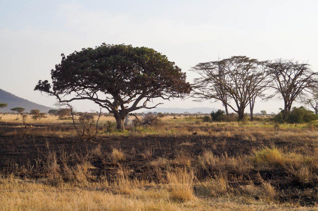 nationale parken tanzania