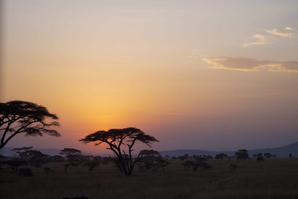 serengeti safari natuur