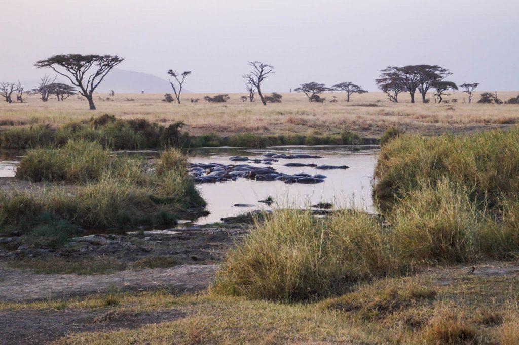 nijlpaarden meer serengeti
