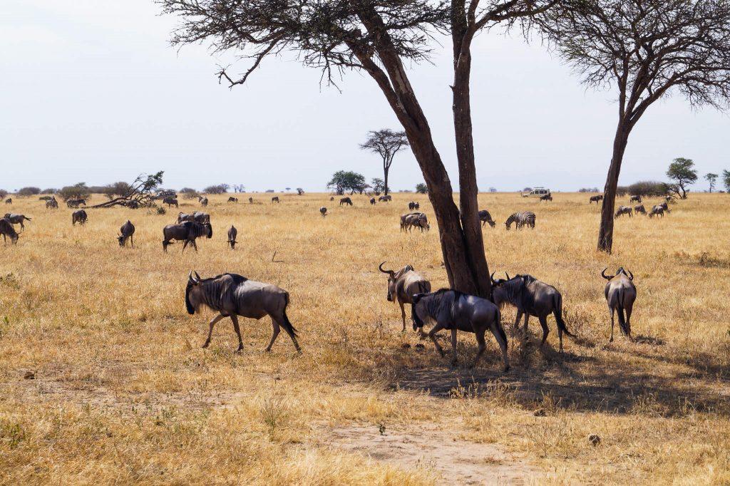 reis tanzania
