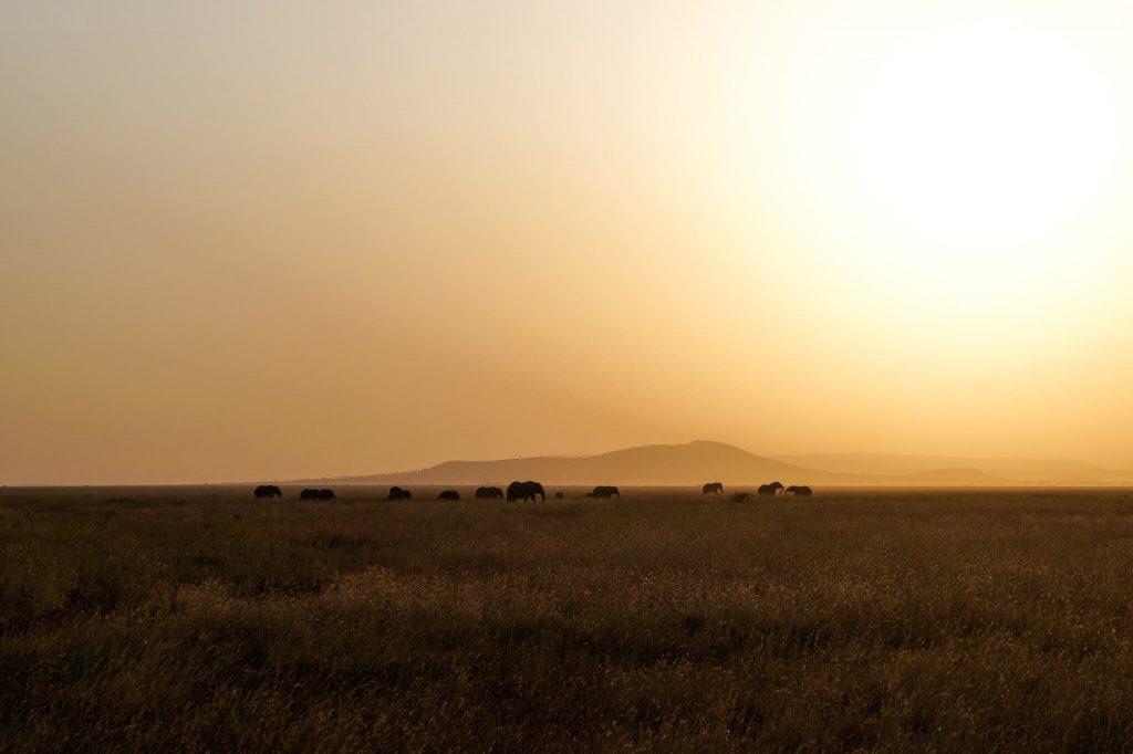 serengeti zonsondergang