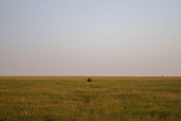 vlakten serengeti