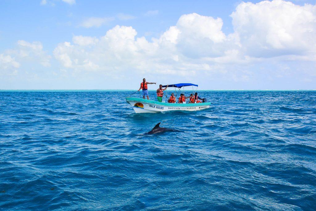 dolfijnen spotten mexico