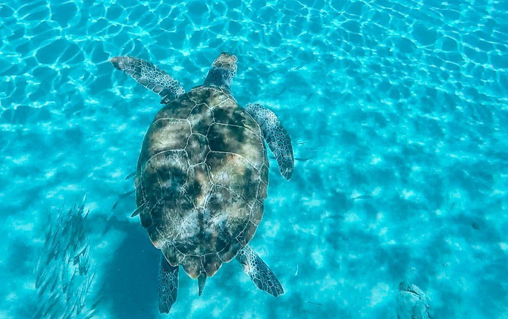 Playa Piskado Curacao snorkelen