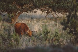 Big Five Veluwe