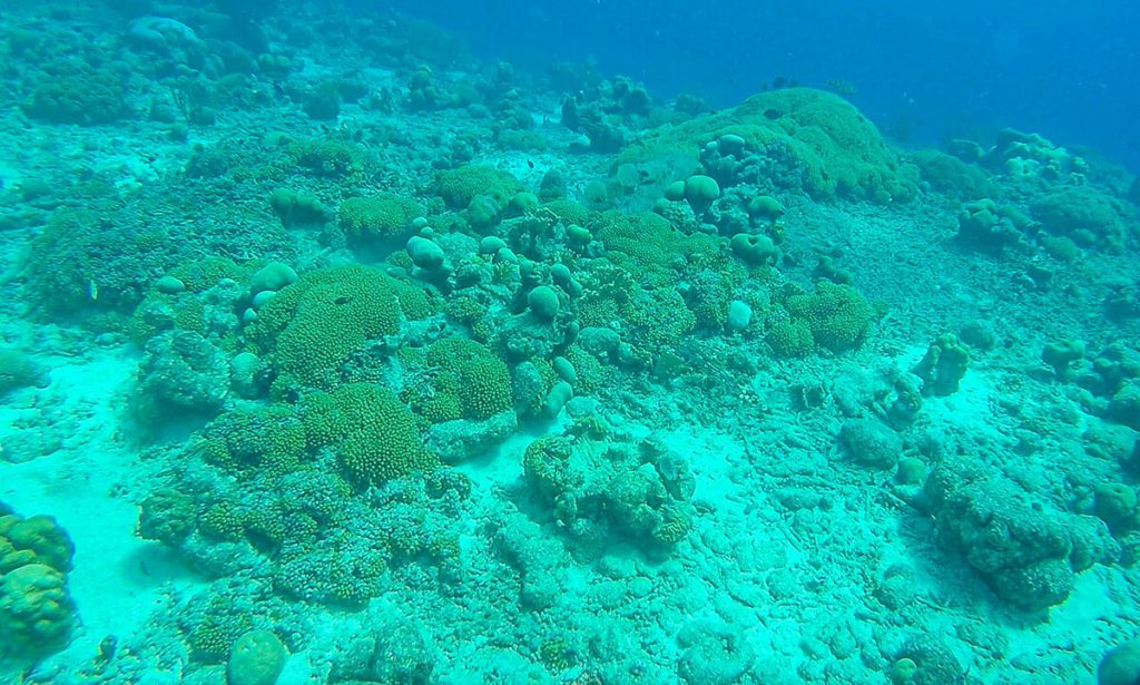 Duiken koraal