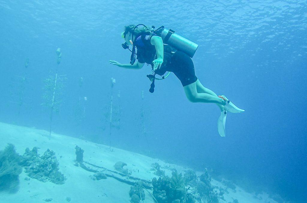 Duiken koraalbomen