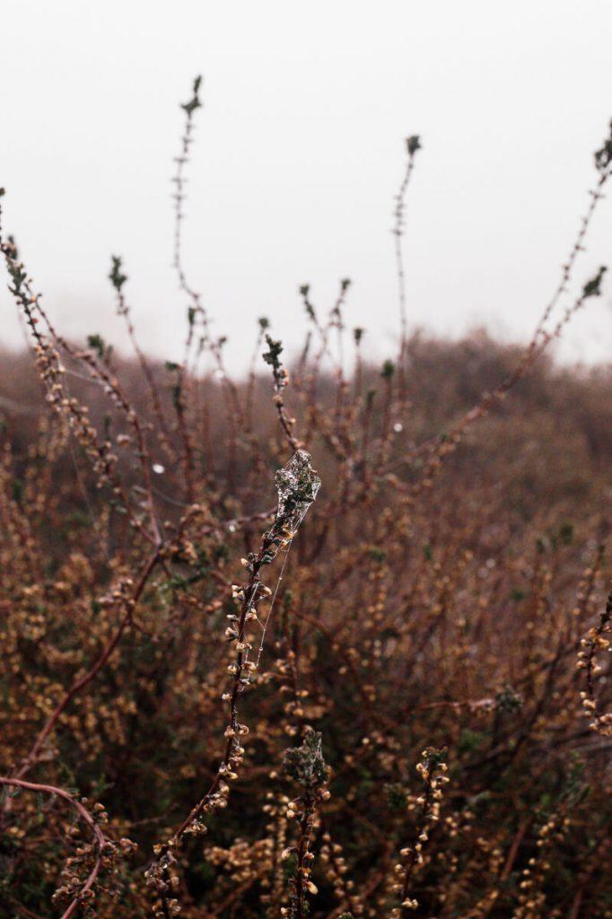 Heidevelden Posbank veluwe