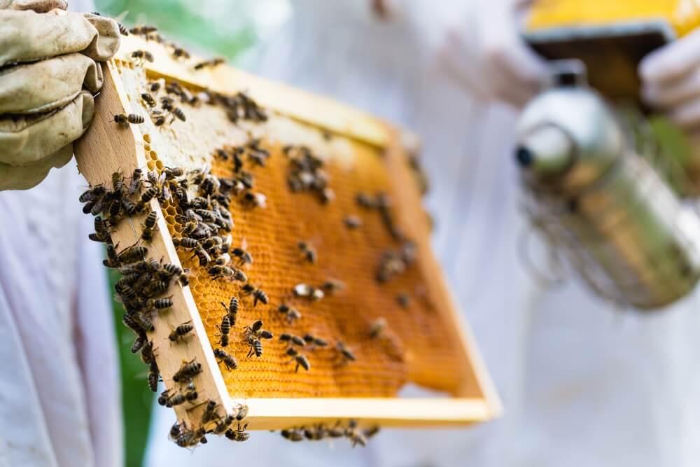 bijen stichting beeserious