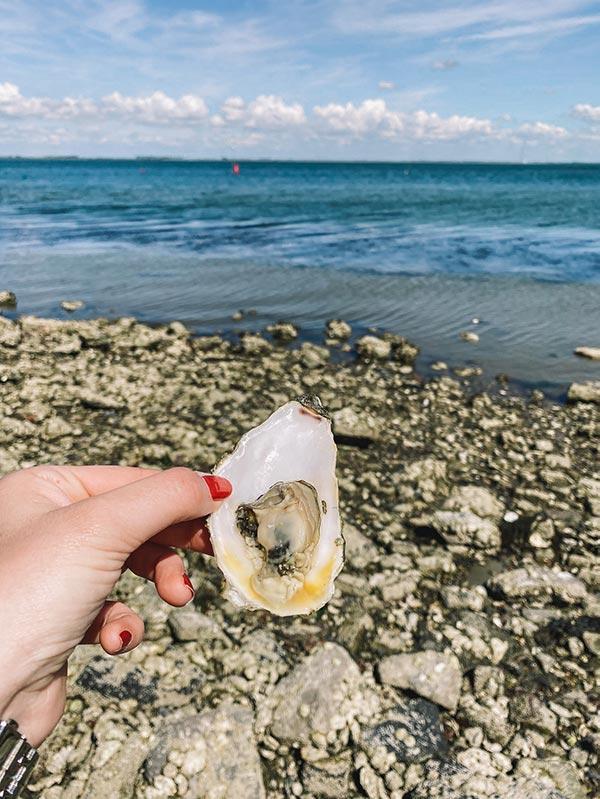 oesters Yerseke
