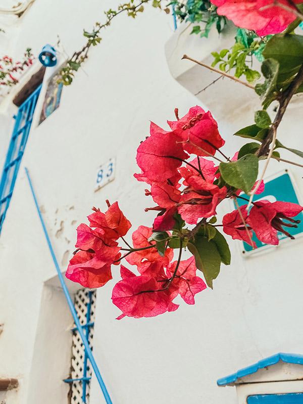 Tips Ibiza-stad